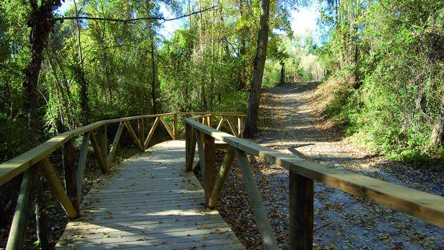 Ruta Río Majaceite en el Bosque