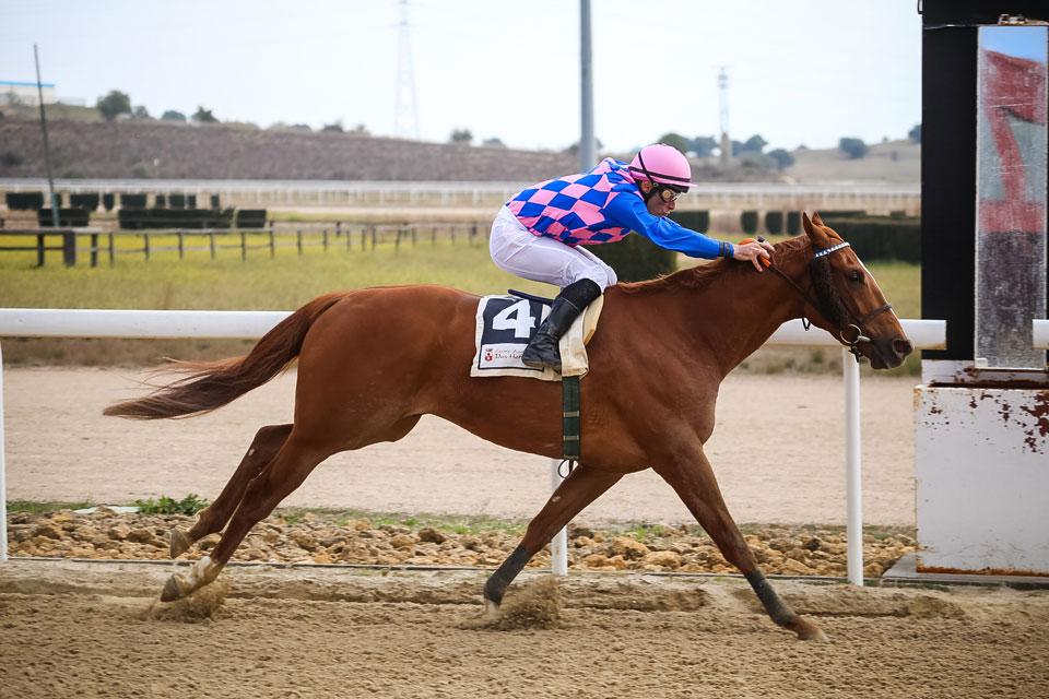 Carreras de caballos en el Gran Hipodromo de Andalucia