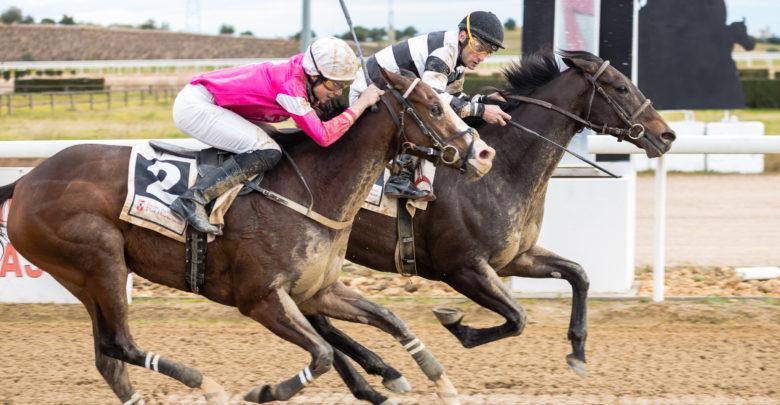 Carrera de caballos en el Gran Hipódromo de Andalucía