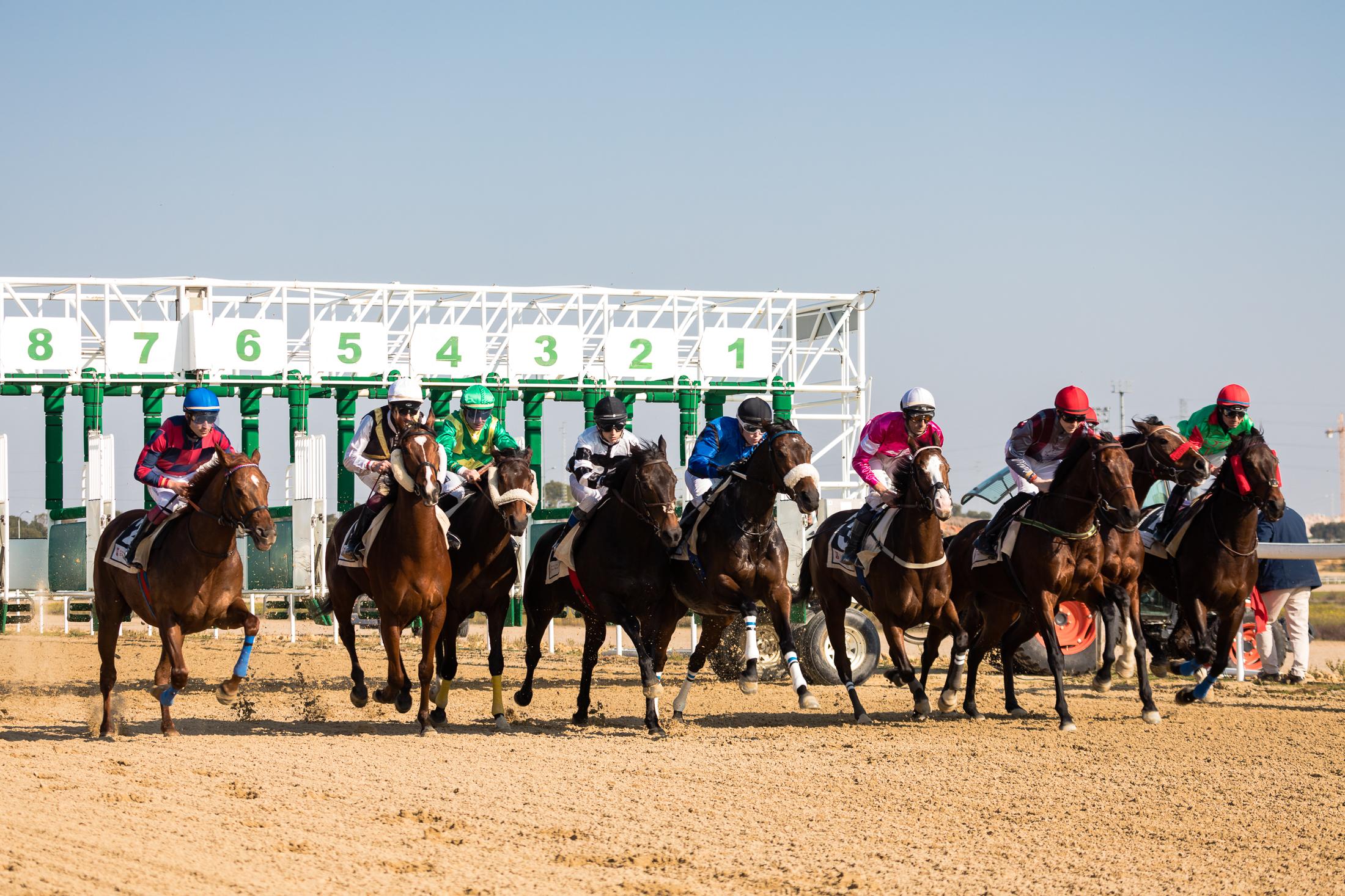 Primera carrera del año 2019 en el Gran Hipódromo de Andalucía
