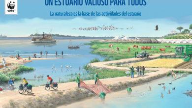 Exposición Un estuario valioso para todos en la fachada del Ayuntamiento de Dos Hermanas