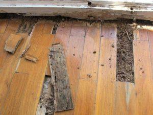 Termitas - Tratamiento de la madera - Eliminación de plagas